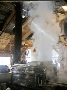 Steam rises to the ceiling  from the evaporator in Mcallister's Sugar Shack