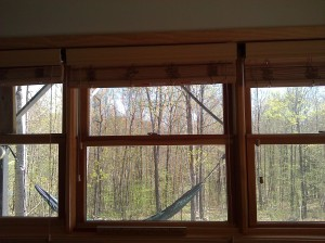 Office window view of the woods