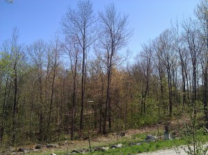 In early May, the leaves are still not on the trees.  You can barely make out the apple saplings.  The beehives are on the far right.  In the distance in the middle of the photo, you can see part of my neighbor's cabin, which he uses only occasionally, on weekends.