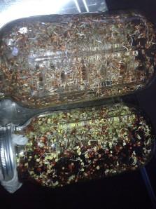My sprouts, growing in mason jars. Top is alfalfa, bottom is radish.
