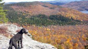 Our dog Spencer checks out the view at the top