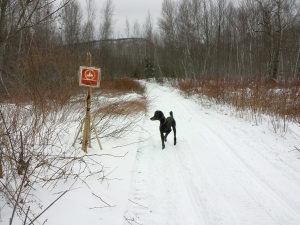 Spencer on the snowmobile trail