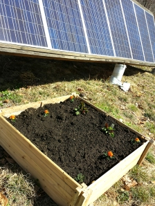 In this box I've planted some chard and will add kale next week.  I had to be careful to choose vegetables that would not grow too tall, lest they throw a shadow on our solar panels, which powers the house.