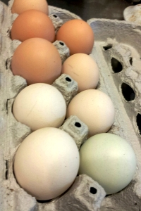 The color of the eggs is determined by the breed of chicken.  There are at least 4 breeds of chickens represented by these eggs.  They vary in size as well.  But they are uniformly fresh and delicious.