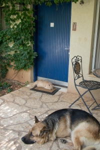 Geula the cat and Lobo the dog greeted us at our zimmer doorstep