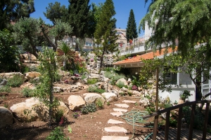 A view of the friend's garden, in Kfar Vradim