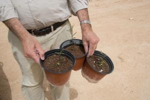 Aragon tree seedlings await planting