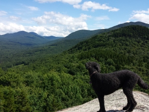 Spencer did very well considering he's 11 (that's 77 in dog years!).    Here he surveys the view from the top of North Sugarloaf.