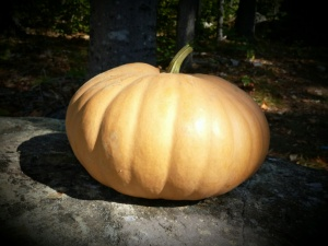 This paler variety of pumpkin is better for pie-making.  The rind is somewhat thinner.