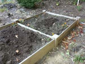 I cleared out the veggies.  Now making this raised bed ready for planting garlic bulbs.