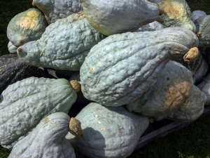 There were several types of Hubbard-like squash, which is a sickly blue-grey that resembles the color of mould.