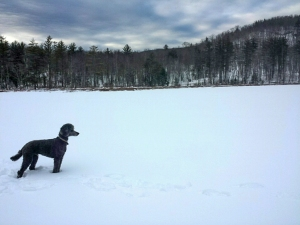 Our dog Spencer stands on frozen Little Pond.